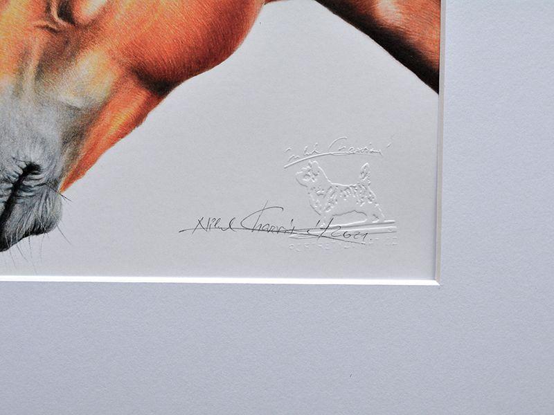 Dva koně - Reprodukce kresby Nikol Charvátové